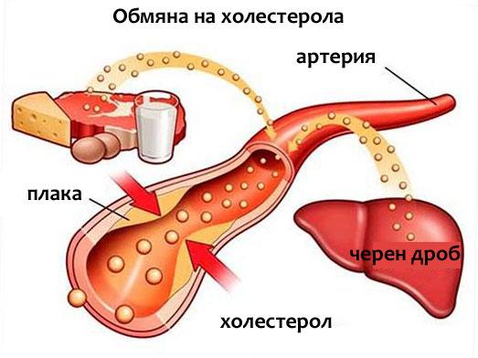 чистене на лош холестерол
