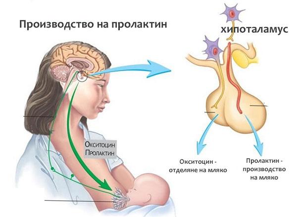 клинико-лабораторни изследвания на пролактина