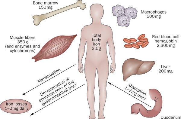изследване за анемия