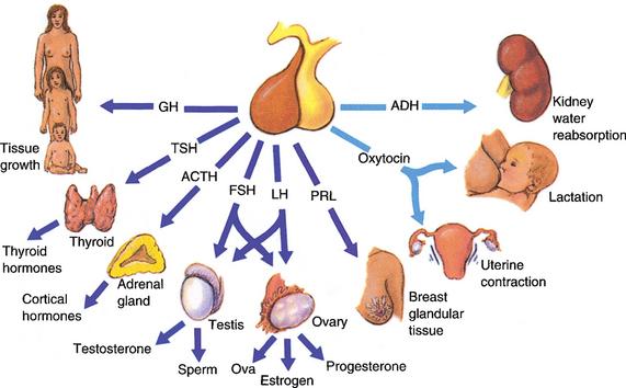 Хормонални изследвания за жени