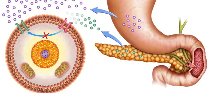 Изследване на инсулинова резистентност