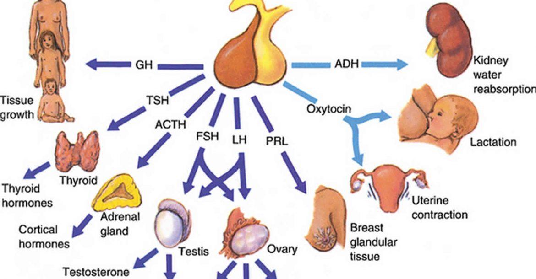 изследване на Фоликулостимулиращ хормон