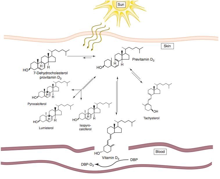витамин D подпомага имунната система