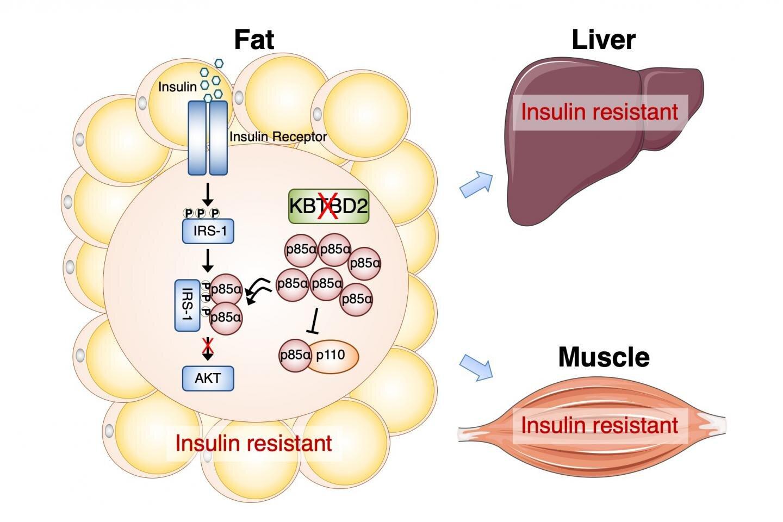 Нормални нива на инсулина