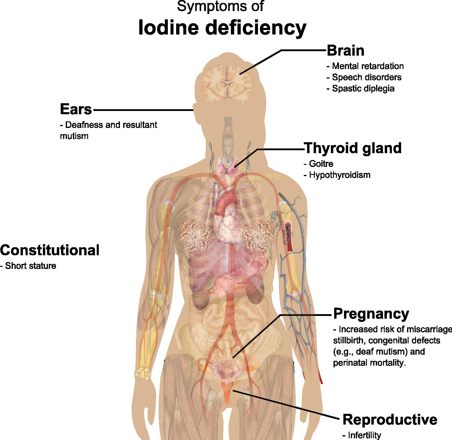 Значението на йода за организма