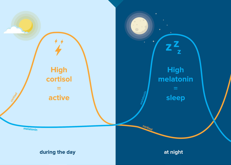 Мелатонин – хормон на съня