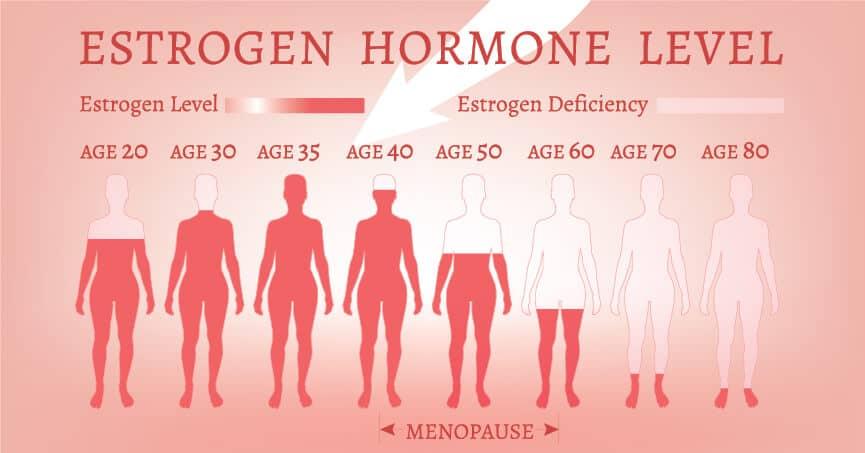 Естроген – женският полов хормон