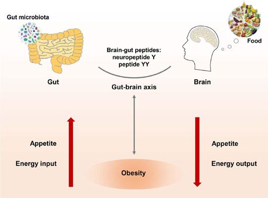 Изследвайте нивото на невропептид У