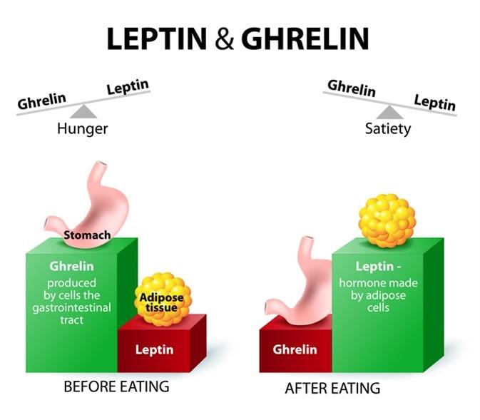 хормона на глада Грелин
