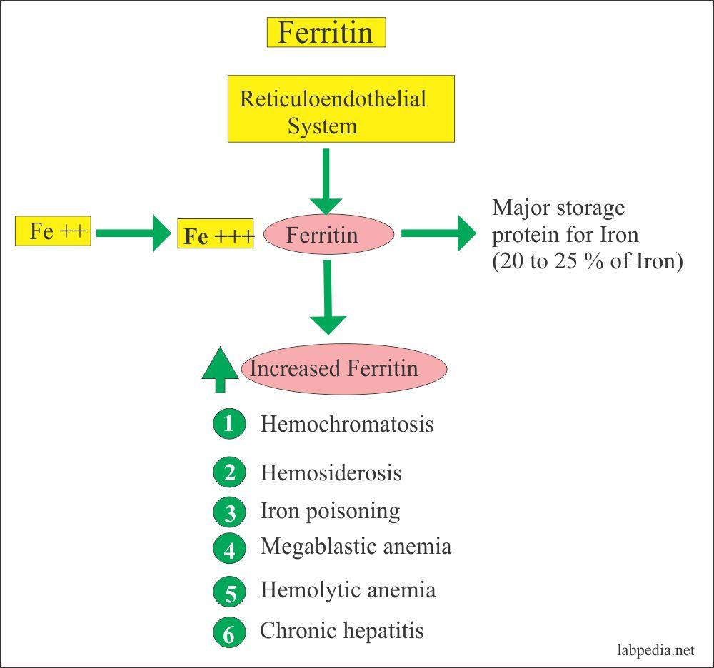 симптомите на недостиг на феритин